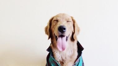 hoian ja jalutan su koera 10€ päev